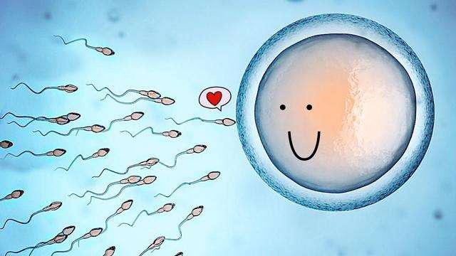 子宫内膜厚度不够厚,精氨酸可以吃吗?